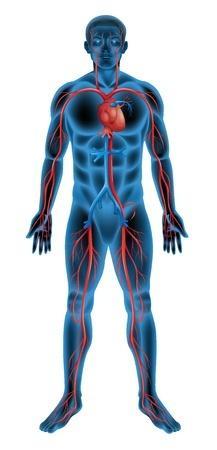 Az erektilis diszfunkció az esetek nagy részében szervi okokra vezethető vissza